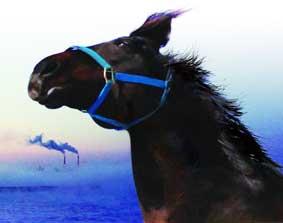 اسبهای فوکوشیما